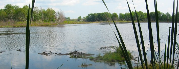 Hawkesbury lagoon will soon be cleaned up