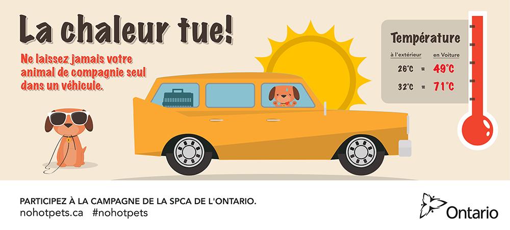La chaleur tue! Ne laissez jamais votre animal de compagnie seul dans un véhicle.Participez à la campagne de la SPCA de l'Ontarionohotpets.ca #nohotpets