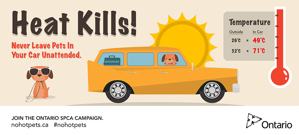 Heat Kills! Never leave pets in your car unattended. Join the Ontario SPCA campaign. nohotpets.ca #nohotpets