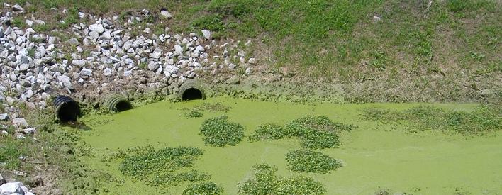 Les eaux usées non traitées provenant de serres ont une teneur élevée en phosphore qui favorise la croissance d'algues et altère la qualité de l'eau.