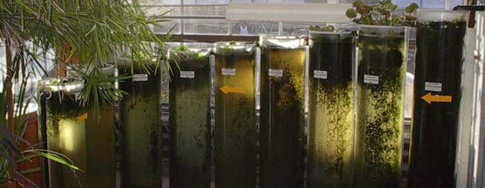 Solar tanks.