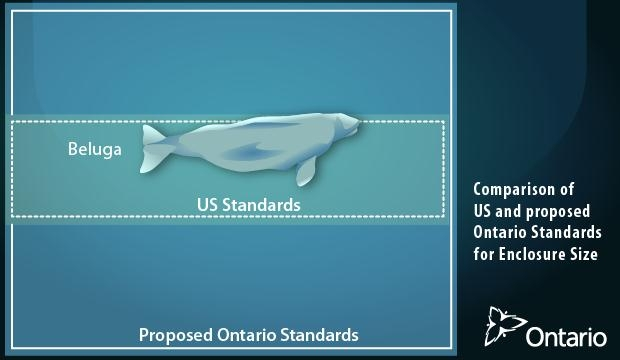 Comparison of US and proposed Ontario Standards for Enclosure Size - beluga